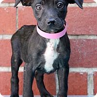 Adopt A Pet :: Renova - Waldorf, MD