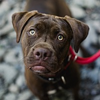 Adopt A Pet :: Brooklyn - Stroudsburg, PA