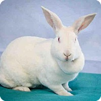 Other/Unknown for adoption in Gardena, California - SUGAR