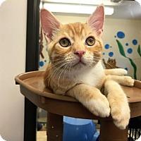 Adopt A Pet :: Kitten Mugsy - Seal Beach, CA