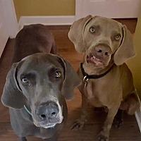 Adopt A Pet :: Belle & Buck - Wagener, SC