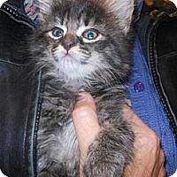 Adopt A Pet :: Addie - Reston, VA