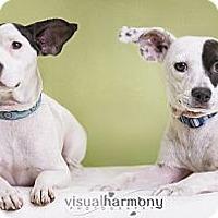 Adopt A Pet :: Penny and Charlie - Phoenix, AZ
