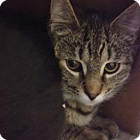 Adopt A Pet :: Atlas - Byron Center, MI
