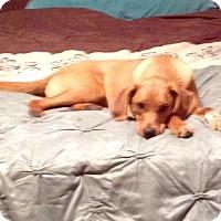 Adopt A Pet :: Molly - Hazard, KY