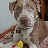 Adopt A Pet :: Rudy - Los Angeles, CA