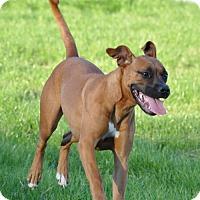 Adopt A Pet :: Kenzie (courtesy listing) - Brentwood, TN