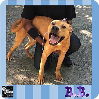 Terrier (Unknown Type, Medium) Mix Dog for adoption in Washington, Pennsylvania - B.B.