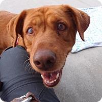 Adopt A Pet :: Bailey:Pending! - Spring City, TN