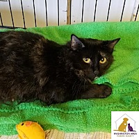 Adopt A Pet :: Alice - Eighty Four, PA