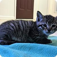 Adopt A Pet :: Paprika - Burgaw, NC