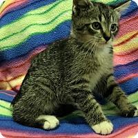 Adopt A Pet :: Fennel - Jackson, TN