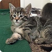 Adopt A Pet :: Hummer - Troy, MI