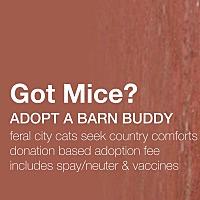 Adopt A Pet :: Barn Buddies (Working Cats) - Trinidad, CO