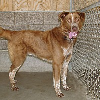 Adopt A Pet :: Tobias - Ruidoso, NM