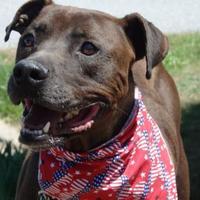 Adopt A Pet :: Chucky - Tiger, GA