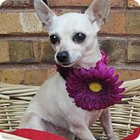 Adopt A Pet :: Elise - Benbrook, TX