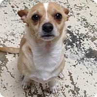 Adopt A Pet :: Baby - Albemarle, NC