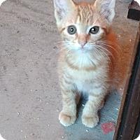 Adopt A Pet :: Tzu Tzu - Armuchee, GA