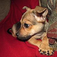 Adopt A Pet :: A442509 Timmie - San Antonio, TX