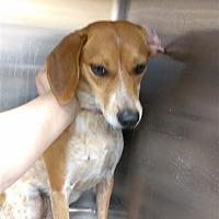 Adopt A Pet :: Missy - Lake Jackson, TX