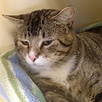 Adopt A Pet :: 17-212 Sonic - Aberdeen, WA
