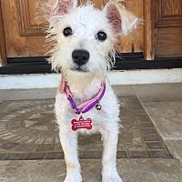 Adopt A Pet :: Puppy Jessie - Encino, CA