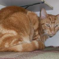 Adopt A Pet :: Bunny - Fairfax Station, VA