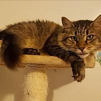 Adopt A Pet :: Rufus - Chesterfield, VA