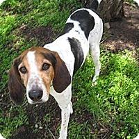Adopt A Pet :: OPHELIA - Lucerne Valley, CA