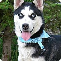 Adopt A Pet :: Skyler - Monteregie, QC
