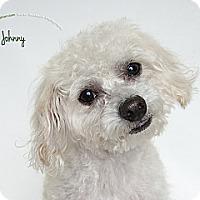 Adopt A Pet :: Johnny - Rancho Mirage, CA