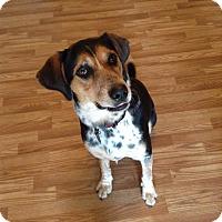 Adopt A Pet :: Gus - Marietta, GA