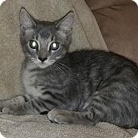 Adopt A Pet :: Perdita - North Highlands, CA