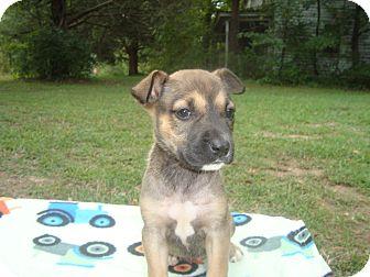 Shepherd (Unknown Type)/Rottweiler Mix Puppy for adoption in Old Bridge, New Jersey - Georgia
