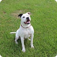 Adopt A Pet :: Tyson - Jupiter, FL