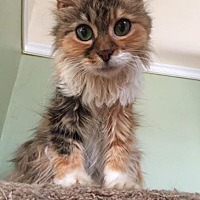 Adopt A Pet :: APRICOT! - Philadelphia, PA