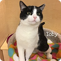 Adopt A Pet :: Toby - Foothill Ranch, CA
