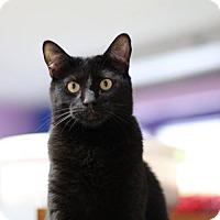 Adopt A Pet :: Purr Baby - Fresno, CA
