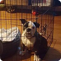 Adopt A Pet :: Theodore - Park Ridge, IL