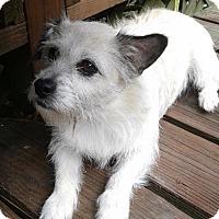 Adopt A Pet :: Ellie-Adorable - Olive Branch, MS