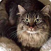 Adopt A Pet :: Etta - Greensburg, PA