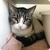 Adopt A Pet :: Chuckie - Reisterstown, MD