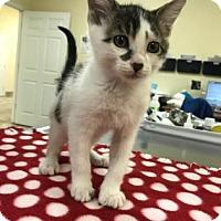 Adopt A Pet :: Shorty - Titusville, FL