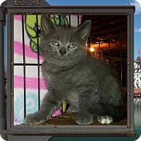 Adopt A Pet :: Curtis - Bethpage, NY
