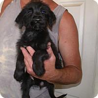 Adopt A Pet :: BILLIE JEAN - Corona, CA