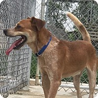 Adopt A Pet :: Cruz - Lagrange, IN