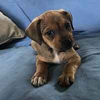 Adopt A Pet :: May - Tumwater, WA