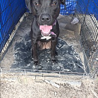 Adopt A Pet :: Lilo - Tallahassee, FL