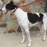 Adopt A Pet :: Bruno - Tampa, FL